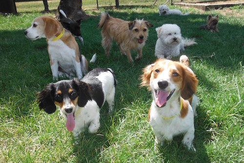 Dogs reside in groups based on size, temperament, age and activity level. Photo © Two Rock Dog Ranch