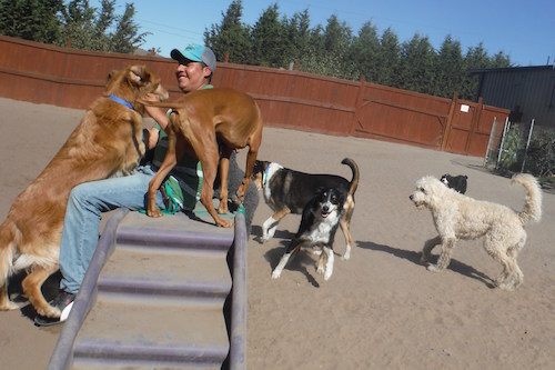 Dogs enjoy constant canine and human companionship, from 7:00 am until 10:00 pm. Photo © Two Rock Dog Ranch