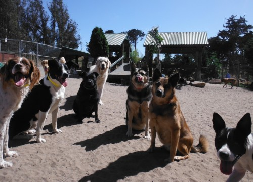 Making new friends and having fun - that's what it's all about! Photo © Two Rock Dog Ranch