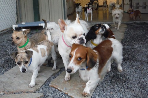 Small dogs on the move! Photo © Two Rock Dog Ranch